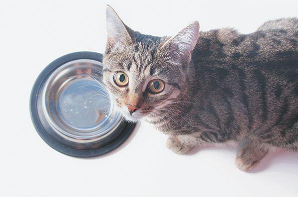 Thunfisch für Katzen - lernen wir die Wahrheit