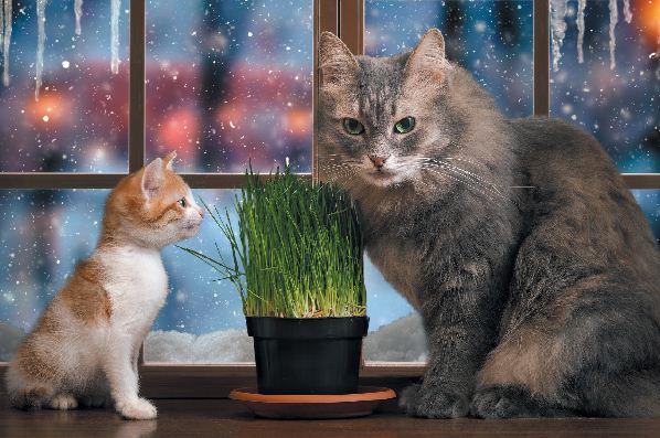 Einführung von Kätzchen bei Ihren anderen Katzen