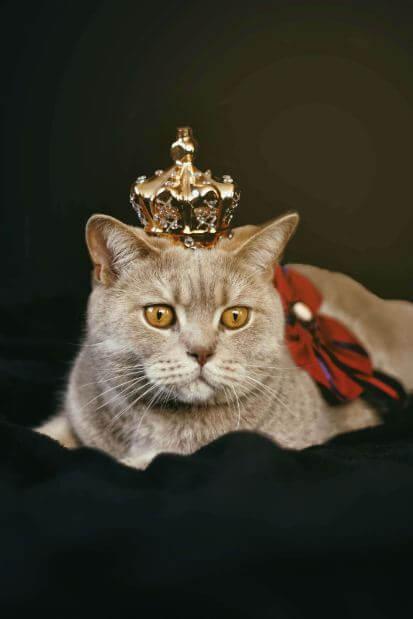 Schöne Katzennamen, um Ihre süßen Katzen zu nennen?