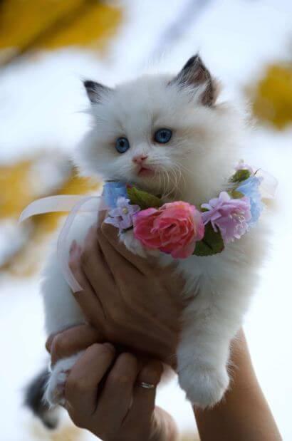 Beliebte Katzennamen: Wie habe ich meine Katze benannt?