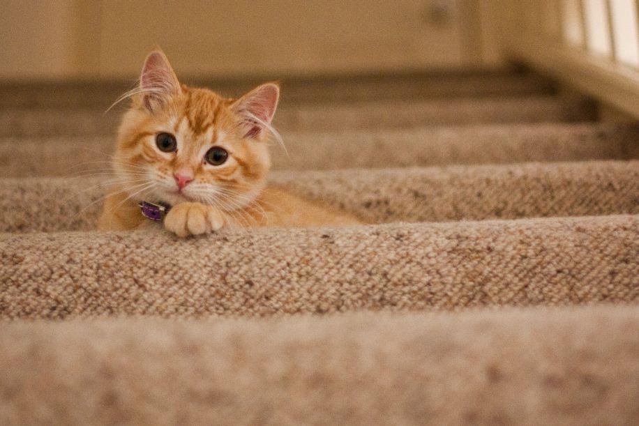 5 Möglichkeiten, das Sozial Media Ihrer Katze zu verbessern