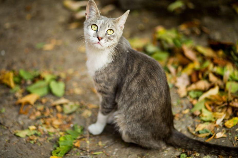 """Katzen Fakten: Wissen Katzen, was """"Nein"""" bedeutet?"""