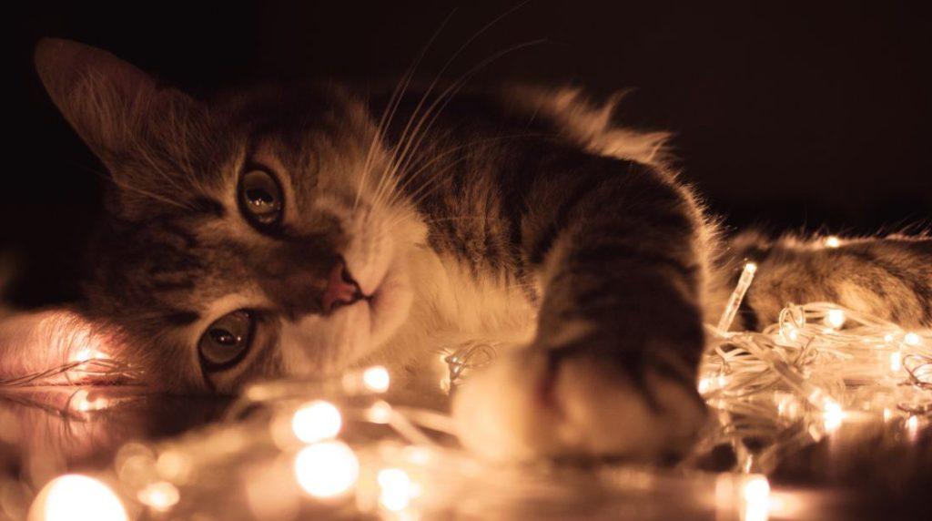 KatzenFerien: Weihnachts Dekoration mit Katzenmotiven