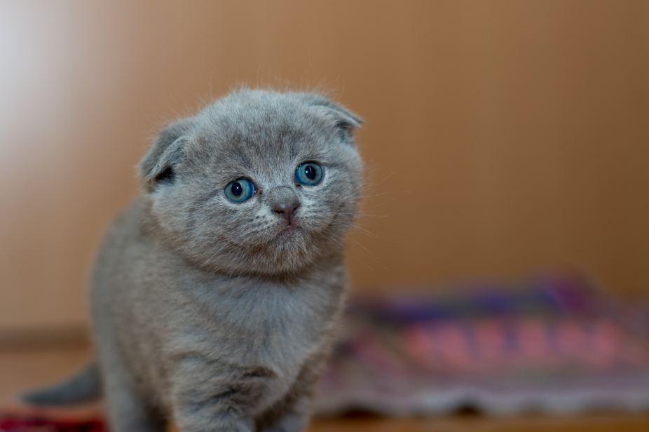 KatzenFerien: Ist Eierlikör sicher für Katzen?