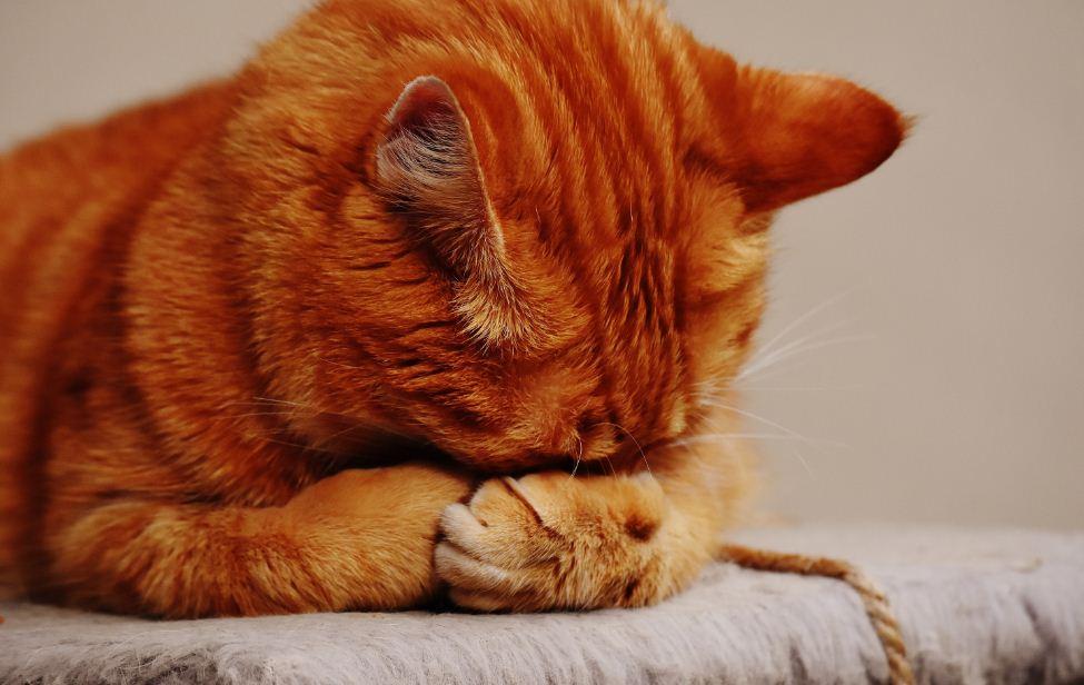 6 der am häufigsten vermeidbaren Katzenunfälle