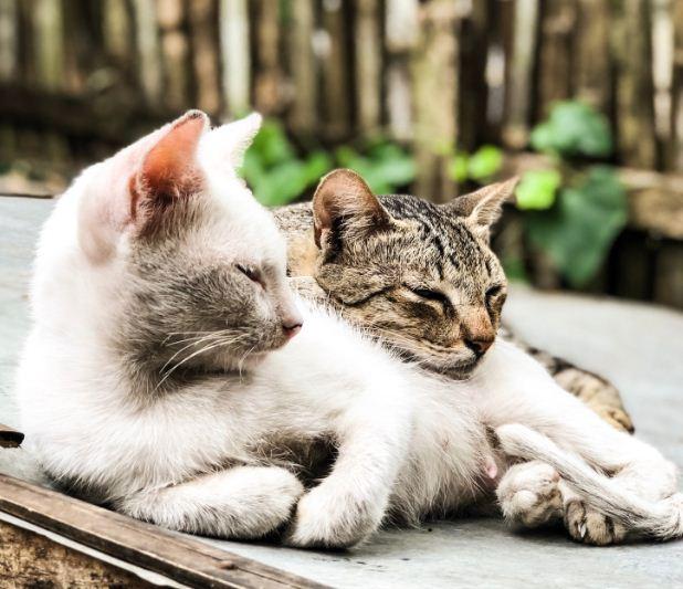 Kuscheln Sie diesem Kitten für den nationalen Tag