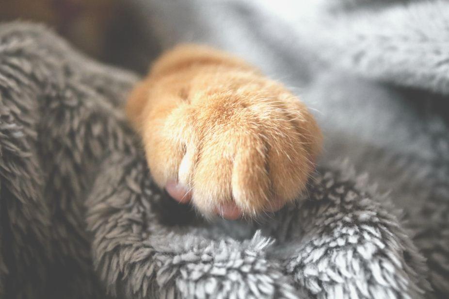 Katzen Fakten: Warum haben Katzen Arm Schnurrhaare?