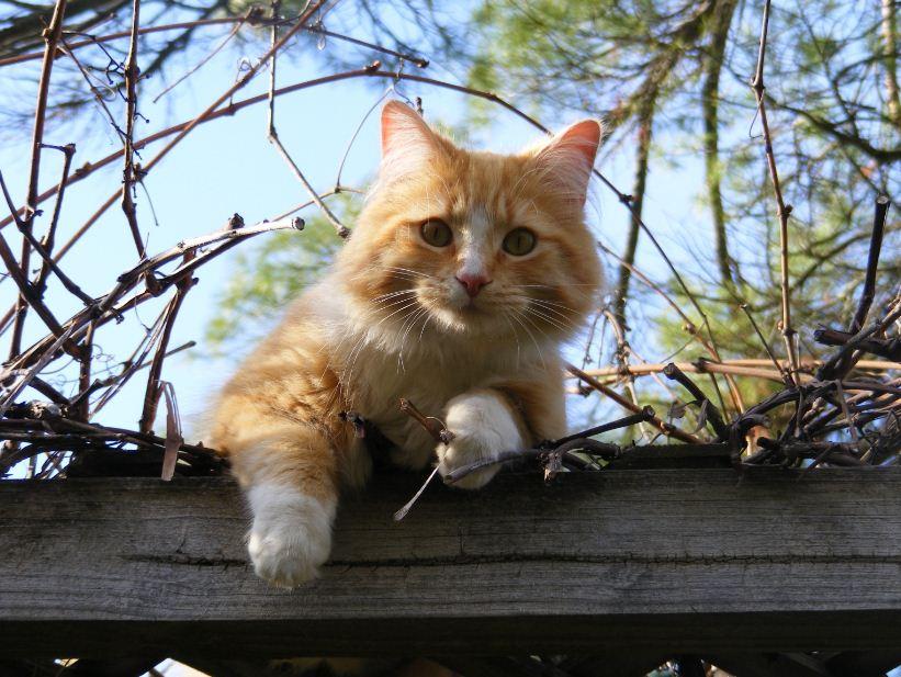 KatzenPflege: Chagas-Krankheit und Ihre Katze