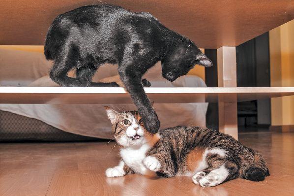 Werden Katzen eifersüchtig? Umgang mit Katzenrivalität