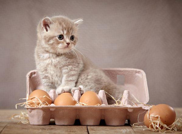 Können Katzen Eier essen? Und sind Eier gut für Katzen?