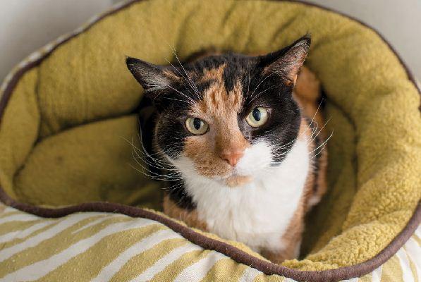 5 älteren Katzenproblemen an den Bordstein