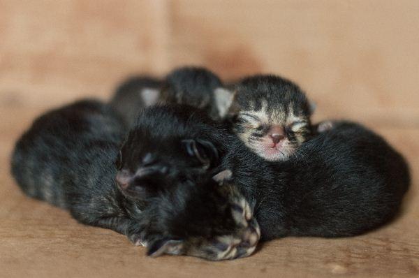 Wann ändern die Augen der Kätzchen die Farbe?