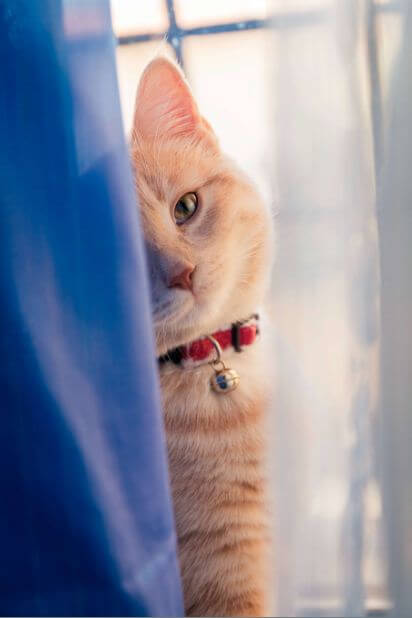Springt eine Katze aus einem offenen Fenster?