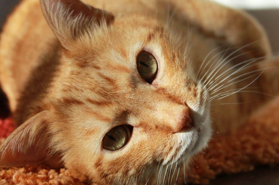 Sind Katzen und Milch tatsächlich eine gute Kombination?