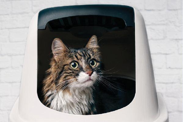 Was Sie falsch mit der Katzentoilette Ihrer Katze tun