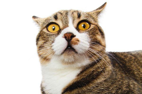 Reagieren Katzen besser auf bestimmte Namen?