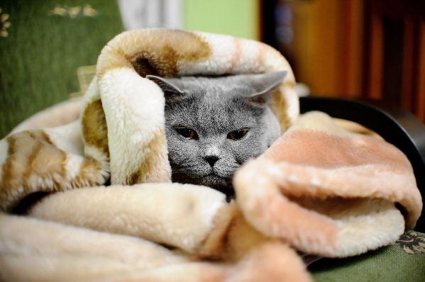 Was Sie über Herzinsuffizienz bei Katzen wissen sollten