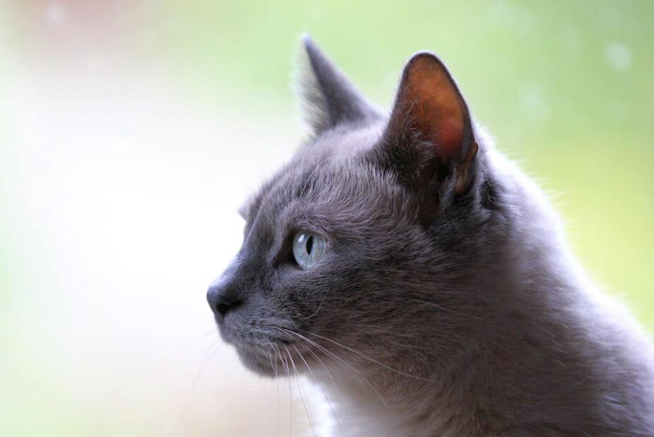Wie finde ich den richtigen Namen für meine Katze?