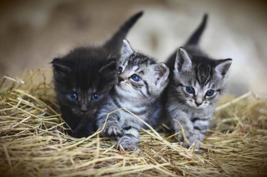 Richtiges Futter für alte Katzen: Gesundheitszustand