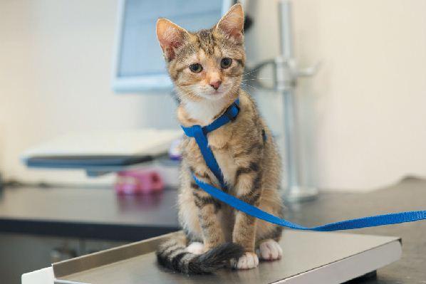 Kätzchen: Pflege Ihrer einjährigen Katze