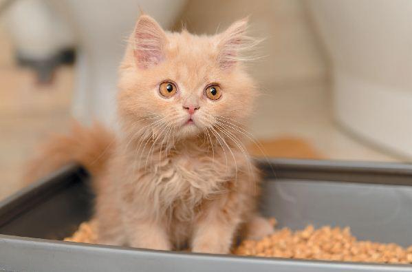 6 häufige Probleme mit der Katzentoilette und  Behebung