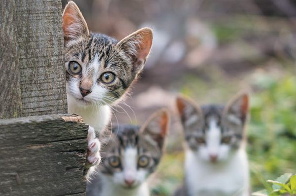 Du hast ein verirrtes Kätzchen gefunden – was ist zu tun?