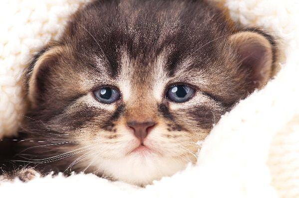 6 Dinge zu tun, wenn Sie ein verlassenes Kätzchen finden