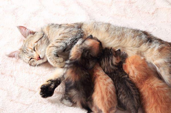 Holen Sie sich die Fakten über Mastitis bei Katzen