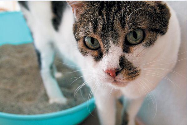 Colitis bei Katzen – Symptome, Diagnose und Behandlung