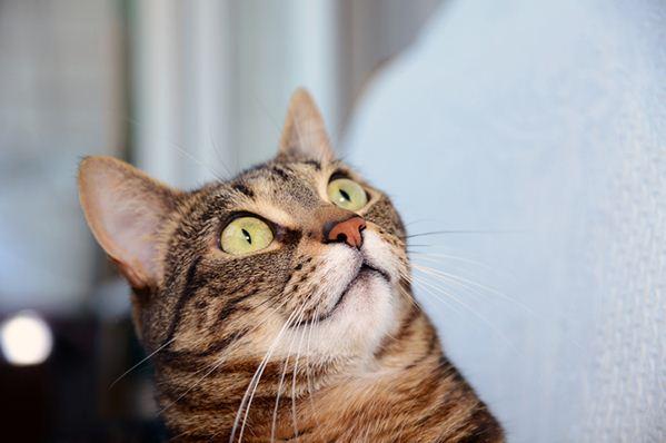 Solltest du dir jemals Sorgen machen, dass Katzen hüpfen?
